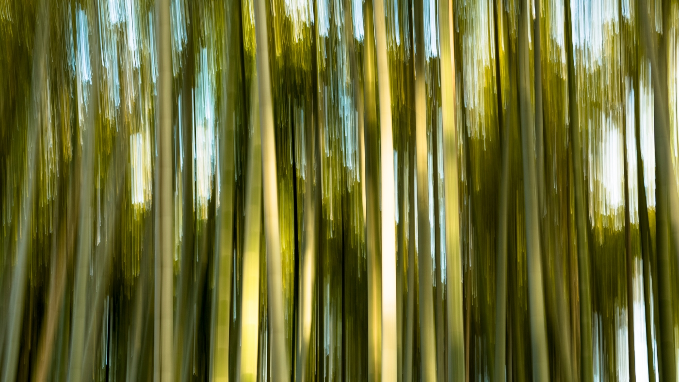 Bamboo-Forest-abstract-1400-x-787