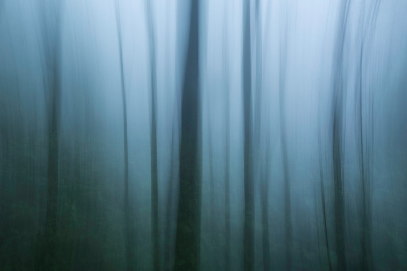Abstract-China-forest-1400x933